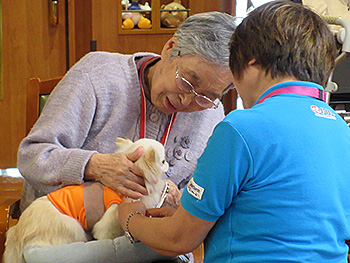 Animal-assisted therapy in action